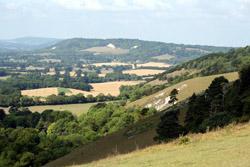 Your Surrey Hills?