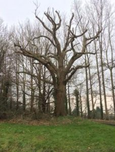 Bletchingley Oak Tree Carving Design Competition