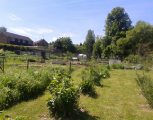 Are you interested in an Allotment?